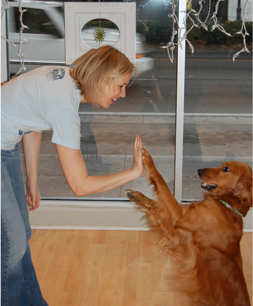 Lucy showing her skills - Hi Five for Katrina!