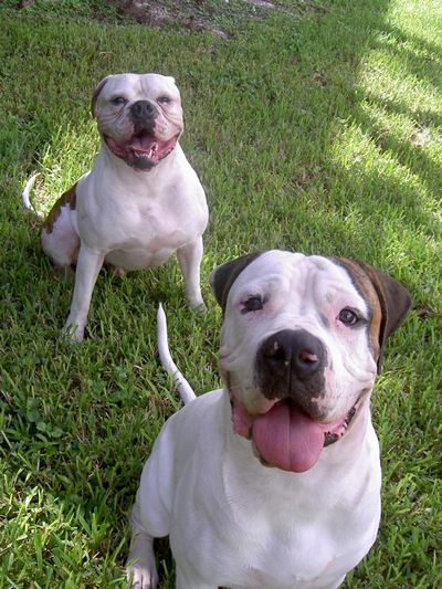 Jorge's Dogs - Tyson and Hunter