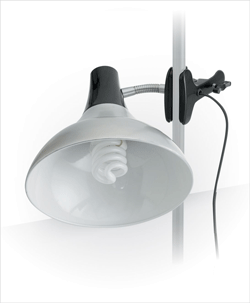 Daylight Clip-on Studio Lamp, Chrome